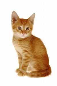 orangecat1_full