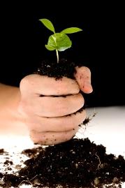 plant-hand2