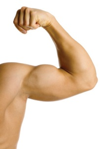 muscles1